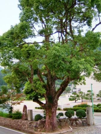 楠の木ウエブ.jpg