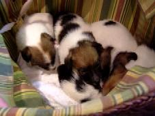 5匹の赤ちゃん犬.jpg